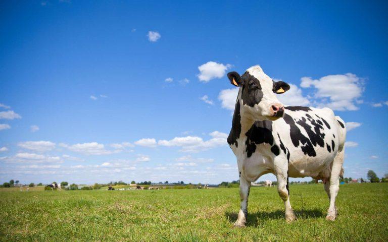 PROTÉINES ANIMALES ET ENVIRONNEMENT FAUT-IL CHOISIR ? - Diet&Cie diététicienne en ligne